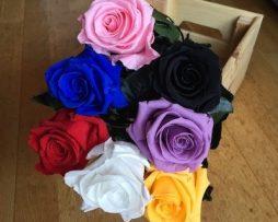 rosas-eternas-preservadas-en-cali7