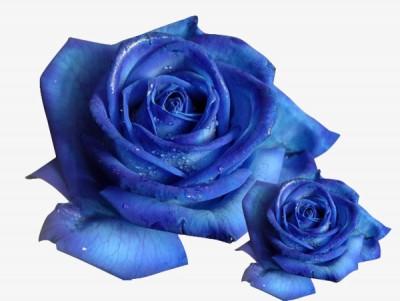 venta de rosa preservada color azul