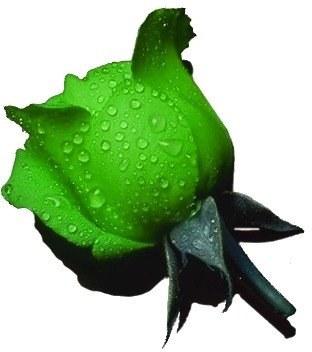 venta de rosa preservada color verde